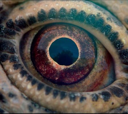 Scena iz filma Potovanje časa: Pot življenja.